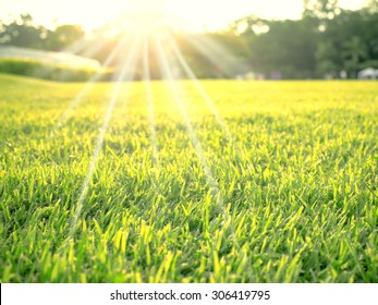 Soft focus on green cutting grass with sun flare on the top