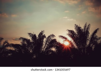 soft focus palm tree with blue sky  at sunset background