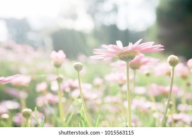Soft focus pink flower with natural background.