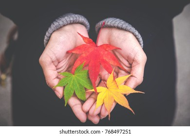 Soft focus of Red and Yellow and Green maple Leaves in hand , Hands holding colorful maple leaves , Beautiful nature season change in Kyoto Japan,