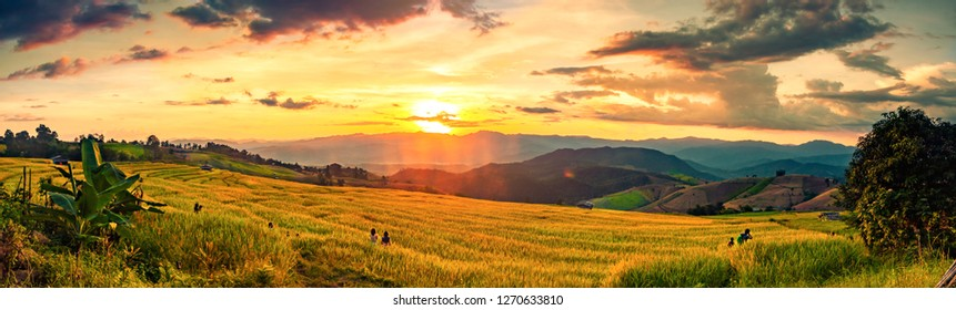 soft focus of rice farm landscape on day noon light.