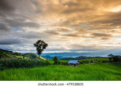 """Soft focus of terrace rice field on the mountain with background ray lighting in the evening. """"Pah Pong Piang"""" in Mae chaem, Chaing Mai, Thailand"""