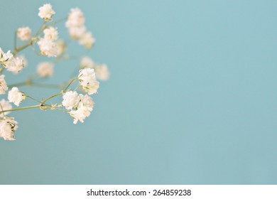 soft focused flowers on blue background