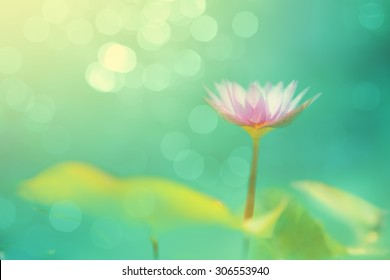 Soft focused image with lotus flower and blur bokeh background