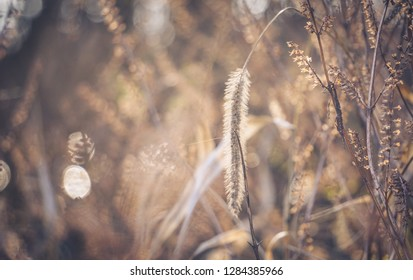 soft foxtail with flare