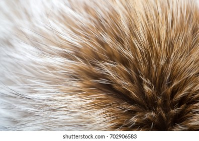 Soft Furry Fur Wool as Background and Textures for Design of Textiles and Fur Products, Brown  Red