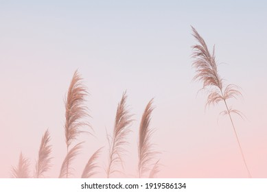 Soft gently wind grass flowers in aesthetic nature of early morning misty sky background. Quiet and calm image in minimal zen mood. Spring nature in pastel tone.