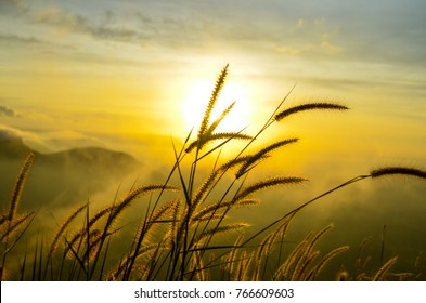Soft grass flower,wild flower with the sun.