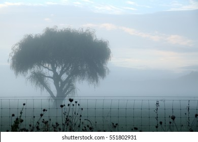 A soft, impressionist view of a foggy morning across a field with a weeping willow tree. The fog and drizzle give a softness and calming effect to this photo in the Bay of Plenty, NZ. horizontal