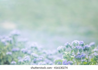 A soft meadow of purple wildflowers with a blurred background.