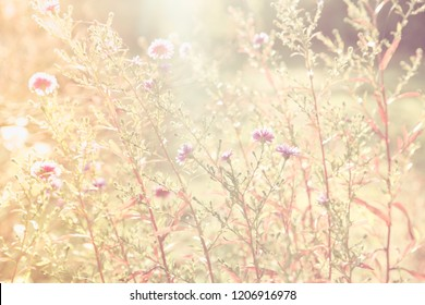 SOFT NATURAL BACKGROUND, BLOOMING FLOWERS IN SUN LIGHT