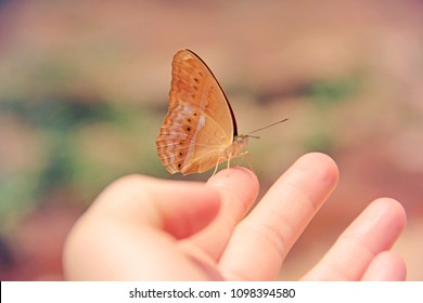 soft and pastel filtered of butterfly sitting on human fingers, selective focus for abstract eco friendly and trusting concept