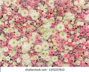 Soft Pastel Flower Wall Floral Background Roses Wallpaper, Wedding Flowers, Wedding Decor