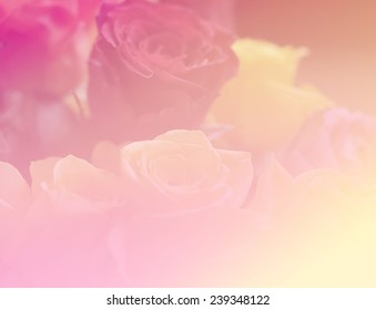 soft pink color nature rose single flowers backgrounds
