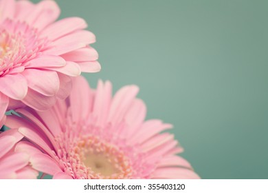 Soft pink daisy flowers on green background