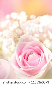 A soft pink rose with a sherbet pastel background