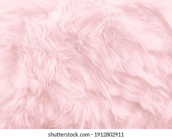 Soft pink sheep fur textured in pastel color for background