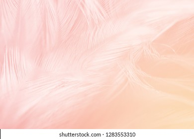 Soft pink yellow vintage color trends feather pattern texture background