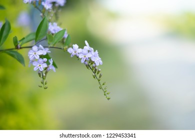 Soft, selective focus of flowers and blurred background.
