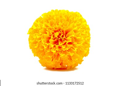 Soft and selective focus Marigold flower isolated on white background.