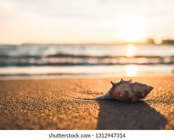 Soft and selective focus, Shells placed on the beach By the sea in the morning With sunlight