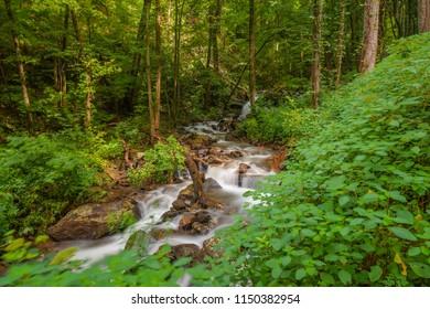 Soft stream through the woods