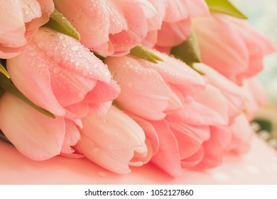 Soft tender tulips of Salmon, pale pinkish orange, light pink color with dew close-up. Spring flowers, abstract romantic floral background for wedding, birthday, Valentine's Day, mothers Day