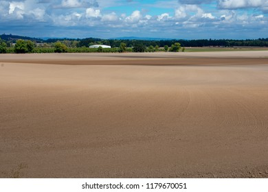Soft tones of earth fade from dark to light into a horizon of green, covered by blue sky with clouds ... in a late summer Oregon farm scene of tilled fields.