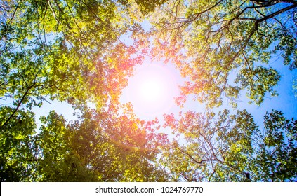 Soft treetops branch on sky and cloud. It blue sky space on middle and green leaves treetop on branch of tree around photo in rise up view. It beautiful natural and refresh in forest on lens flare.