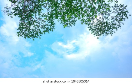 Soft treetops branch on sky and cloud. It blue sky on bottom and green leaves treetop on branch of tree on top photo in rise up view. It beautiful natural and refresh in forest on summer time