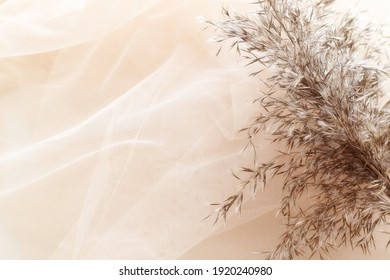 soft tulle fabric with dry plant
