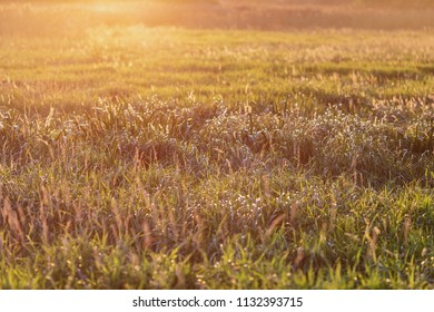 Soft warm sunset glow over the meadow