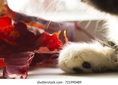 soft white fluffy cat's foot