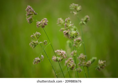 Softened Fields is a photograph of a cluster of weeds in the middle of an open field.