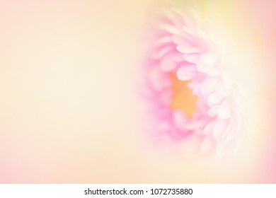 The softest flower.  A pink and yellow flower with text area on the left in a horizontal presentation.