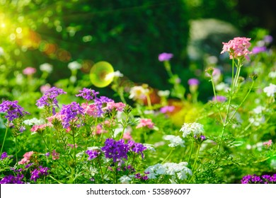 Soft-focus of flowers blooming in a field during summer with selective focus and blurry background with sun lighting flare effect.