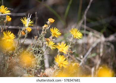 A softly focused photo of bright yellow wildflowers creates a peaceful natural background.