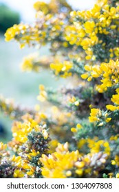 Spiky Yellow Flowers Images Stock Photos Vectors Shutterstock