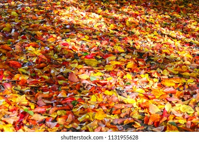Soil covered with many colorful autumn leaves