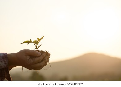 Soil cultivated dirt, earth, ground, agriculture Field  land background Nurturing baby plant on hand,Organic gardening, agriculture. Nature closeup and selective focus and vintage tone.