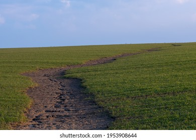 Soil erosion. The rains have eroded the soil in the agricultural field. Formation of ravines in the field due to rainwater runoff.