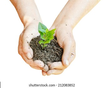 soil and green sprout in farmer hands isolated on white background