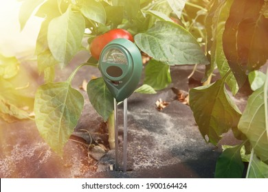 Soil measurements with a digital device. Green plants measure pH and soil moisture. High tech agriculture concept. Blueberries and strawberries. Plant diseases. With sunbeams