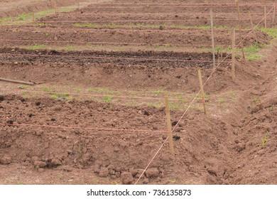 Soil preparation for planting the garden