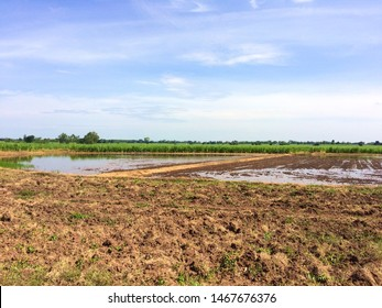 Soil prepared to muddy to rice field for next season