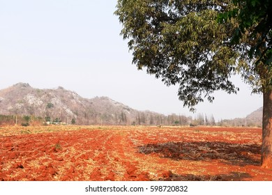 Soil problem is a one of the problem in the environment due to Climate Changes. A Tree on arid soil.