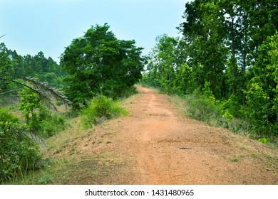 soil roads have gone inside the jungle under blue sky,soil roads have gone inside the village forest under blue sky,green trees,trees,Indian road,Indian village