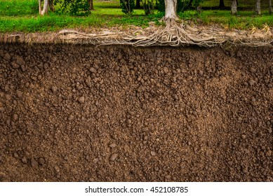 Soil Root of tree background