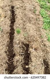 Soil Stocks: compost laid in rows over freshly tilled garden soil