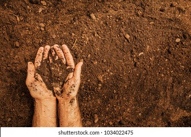 Soil in a strong farmer's (man's) hands on field background captured from above (top view, flat lay). Agriculture, gardening or ecology concept layout with free text (copy) space.